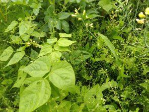畑の様々な植物たち